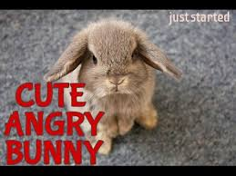 Angry Bunny Meme - cute angry bunny just started youtube