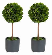 Topiary Frames Online Ball Preserved Boxwood Desktop Topiary In Pot Set U0026 Reviews Joss