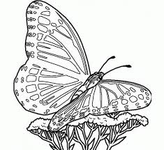 colour drawing free wallpaper the simple butterfly coloring