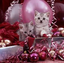 silver kittens and pink christmas decorations photo wp08540