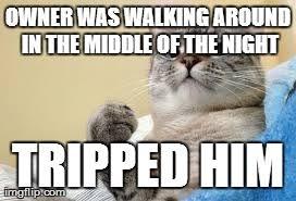 Success Cat Meme - cats are assholes imgflip