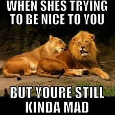 Baby You Still Mad Meme - 50 very funny lion meme pictures and images