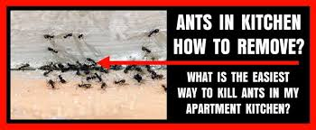 How To Get Rid Of Roaches In The Bathroom Kitchen Apartment Is Filled With Ants And Roaches Best Way To