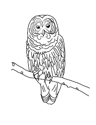 sheets free owl coloring pages 31 with additional coloring print