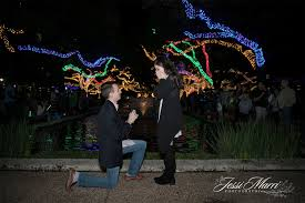 zoo lights houston prices a magical zoo lights proposal jessi marri photography best