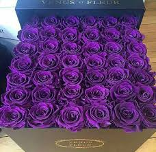 purple roses my favorite purple roses purplelicious purple