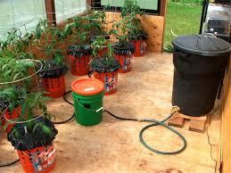 97 best tomato images on pinterest gardening flower and garden