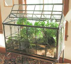 trendy terrariums plants can thrive with no care in wardian cases