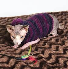 sweaters for cats cat sweaters for cats photo album best fashion trends and models