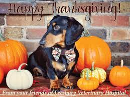 thanksgiving pet safety leesburg vet