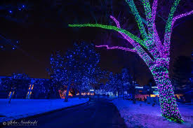 Wild Lights Denver Zoo by Zoo Lights At The Denver Zoo Photos