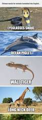 best 25 funny names ideas on pinterest animal names funny