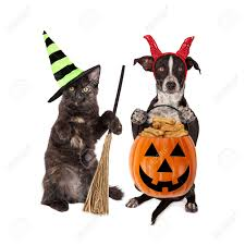 cute black kitten and puppy dressed in halloween costumes holding