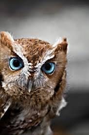 best 25 owl eyes ideas on pinterest beautiful owl owls and