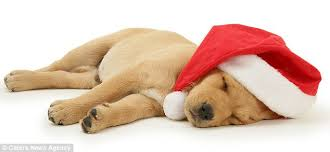 cute dog christmas wallpapers christmas free hd top most downloaded wallpapers page 20