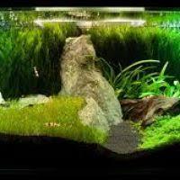 Java Moss Aquascape Moss Ball Carpet Aquarium Thesecretconsul Com