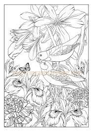 bird garden pack may colouring and tangling