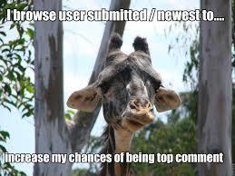 Meme Giraffe - new meme shameful admission giraffe imgur use only imgur