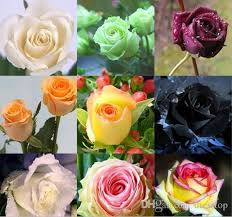 flowers online cheap multicolour flower seeds 100 seeds package cheap balcony
