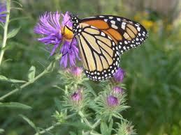butterfly garden plan top butterfly flowers