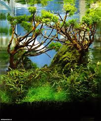 descubre los increíbles jardines acuáticos de takashi amano