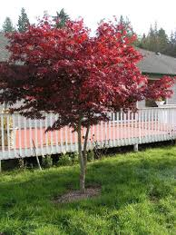 charming decoration small landscaping trees good looking 1000
