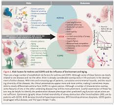 Anatomy And Physiology Of Copd Asthma Copd Overlap Syndrome Acos Im Reference