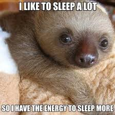 Cute Sloth Meme - cute quote w adorable baby sloth why i sleep a lot