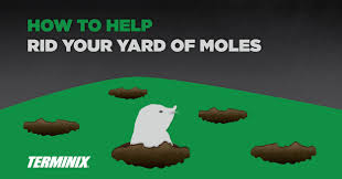 How To Get Rid Of A Skunk In Your Backyard How To Help Rid Your Yard Of Moles Terminix