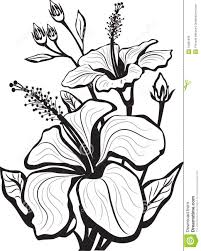 sketch of hibiscus flowers royalty free stock images image 19061339
