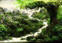 Aga Aquascape Awesome Aquascaping Layouts Ideas Aquascape Ideas