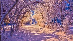 winter purple winter sunset snow sunsets nature trees landscape