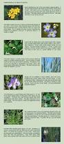 Plants That Do Not Need Much Sunlight by Frequently Asked Questions Easy Assembly Algae Control Aquatic