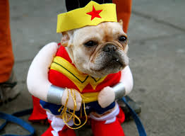 photos dogs in cute and hilarious halloween costumes