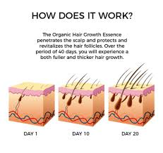 essential oils for hair growth and thickness organic hair growth essential oil gustogalore
