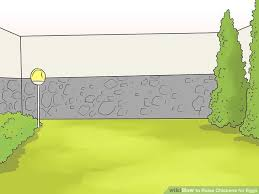 Chickens For Eggs In Backyard How To Raise Chickens For Eggs With Pictures Wikihow