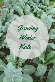 498 best vegetable gardening images on pinterest veggie gardens