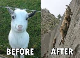 Funny Goat Memes - 10 of the best i crave that mineral tumblr goat memes