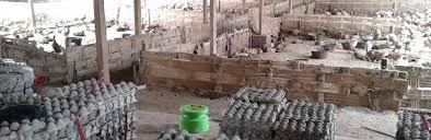membuat telur asin berkualitas grosir telur asin brebes distributor telur asin brebes cabang