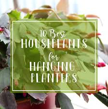 10 easy care plants for 10 best plants for indoor hanging planters u2013 flowerups