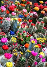 succulents meaning plant life cacti and succulents