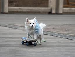 american eskimo dog tricks 6 tricks you should teach your dog animal bliss