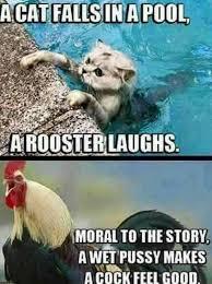 Meme Hump Day - 24 hilarious hump day meme that make you smile my usa pics