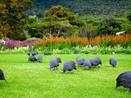 Kirstenbosch National Botanical Garden Olympus Digital Zuid Afrika Pinterest South Africa