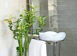 Bathroom With No Window How To Make A Small Bathroom Look Bigger By Adding Eco Solutions