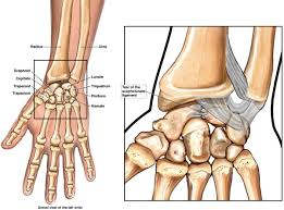 Ankle Anatomy Ligaments New York Jets Injury Update Revis And Clady Turn On The Jets