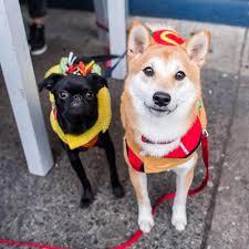 the dogist tompkins square park dog halloween parade dog milk