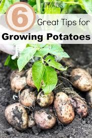 gardening tips 37 best gardening images on pinterest gardening garden ideas