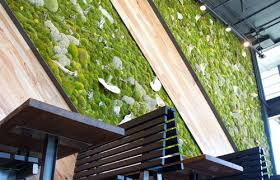she shack living walls vertical gardens plant walls moss walls