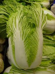 cabbage china cabbage nutrition facts benefits recipes and pictures